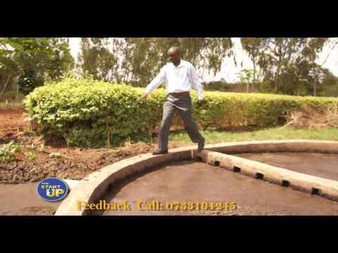 THE STARTUP TV SHOW: AFRISOL ENERGY LTD