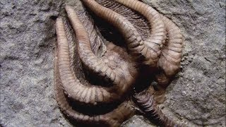16 Strangest Living Fossils Part 2 by Epic Wildlife