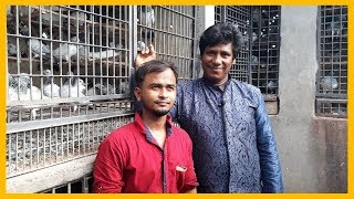 ROBIN PIGEON LOFT পিজন রবিন লোফট FAST TIME VIDEO NEW HOME LALBAG PART-2  pigeons market.net