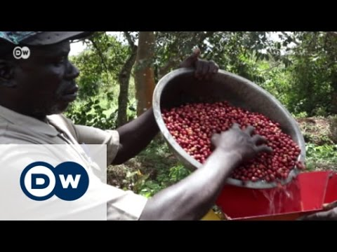 Coffee From South Sudan - Blessing Or Curse? | Global 3000