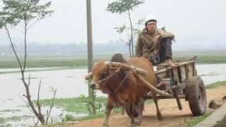Ha Tinh Vietnam  City new picture : Living in Ha Tinh Vietnam