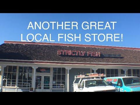 Visit to an Amazing Aquarium Store in So Cal!_Akvárium