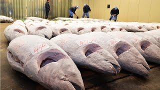 Video Frozen Tuna After Harvest Vessel to Factory - Tuna Processing and Packing MP3, 3GP, MP4, WEBM, AVI, FLV November 2018