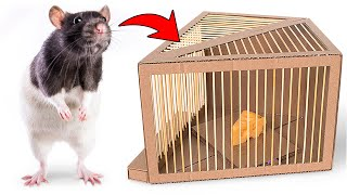 How To Make Humane Rat Trap From Cardboard