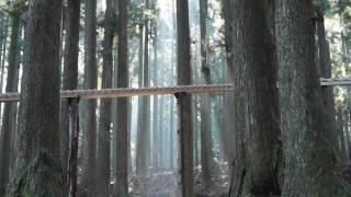 森の木琴 - YouTube