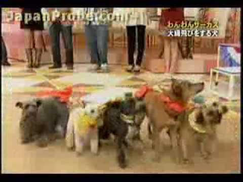 Perros saltando la cuerda - Graciosísimo