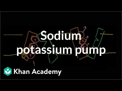 Sodium-potassium pump | Cells | MCAT | Khan Academy