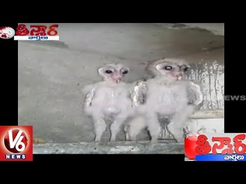 Mysterious Birds Found In Vizag | Teenmaar News