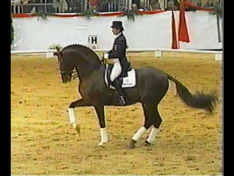 Donnerhall (1981-2006) had a successful career in the dressage sport. He finished 3rd at the 1994 World Championships at The Hague and won team gold.