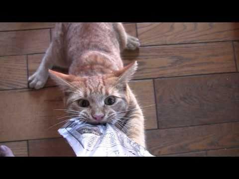il-gatto-che-non-molla-losso-132