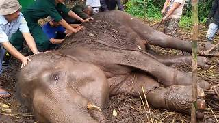 Gajah Sekarat di Kebun Binatang Bandung Akhirnya Mati