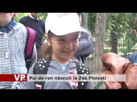 Pui de ren născuți la Zoo Ploiești