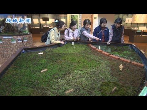 県自然博物館企画展 コケの魅力を紹介 6月16日まで