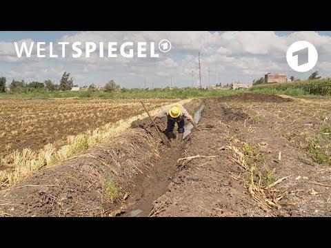 Bedrohte Lebensader Nil | Weltspiegel
