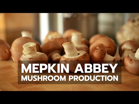 Mushroom - A short visit to see how Cistercian monks at Mepkin Abbey produce their world famous oyster mushrooms.