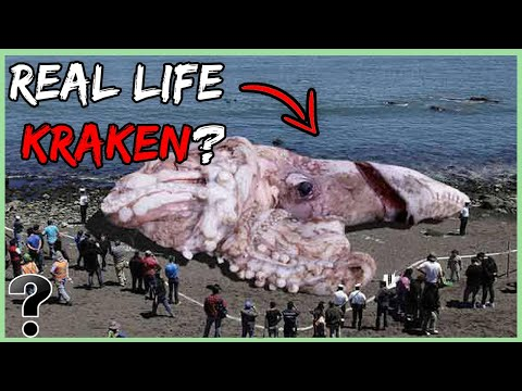 What If The Kraken Existed Today?