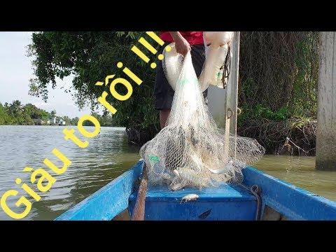 Mồi chày cá mè vinh từ mồi câu. Hốt trọn ổ cá trong 1 cú quăng chày | Săn bắt SÓC TRĂNG | - Thời lượng: 44:20.