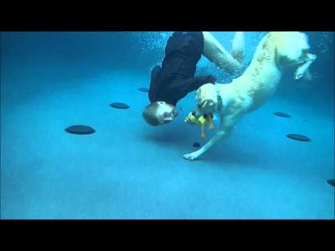 labrador retriever training sub!