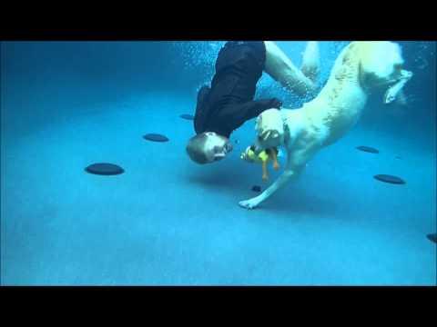 labrador retriever training sub!