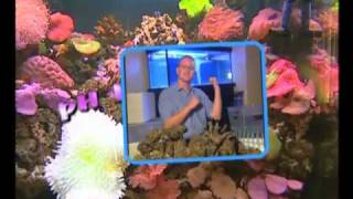 Aquarium Guide! YouTube video