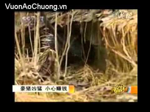Nuôi Nhím Tại Trung Quốc,Phần 1,Kỹ Thuật Nuôi Nhím
