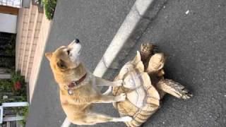 Dog Riding Turtle