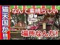 【海外の反応】日本のあの有名な歩道がネコ天国と化していると外国で話題に「なんて素晴らしい場所なんだ!」