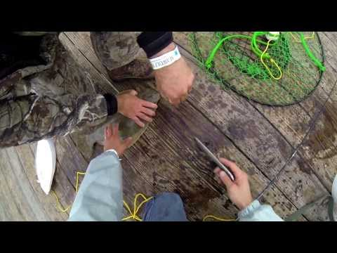 Flounder Fishing Galveston, Tx (19″ 21″ 22″) 720p HD