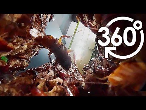超地獄級360度VR影片 置生日本2000隻蟑螂巢穴!