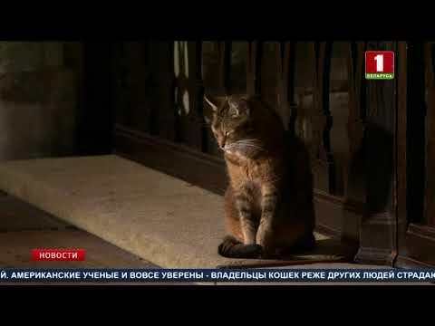 8 августа - Международный день кошек