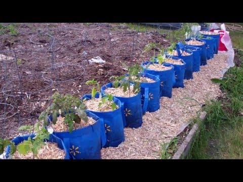 The Underground Hybrid Self Watering Rain Gutter Style Grow System Is Done! Grow Baby Grow!