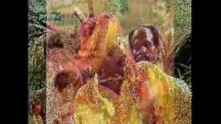 Mirza Maasi Kolun Janda {mirza Sahiban} By Alam Lohar