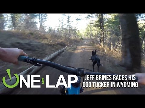 Who's Faster? Tucker the Dog or Jeff Brines the Mountain Biker? (видео)