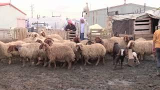 Lebanon transboundary animal diseases