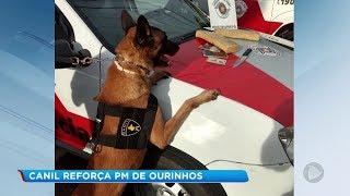 Cão Bóris é o novo reforço da Polícia Militar de Ourinhos