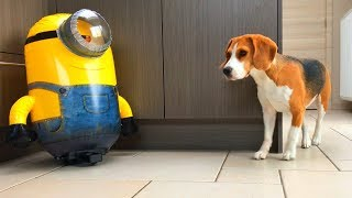 🍌MINION IN REAL LIFE vs DOGS🍌 : Funny Dogs Louie and Marie