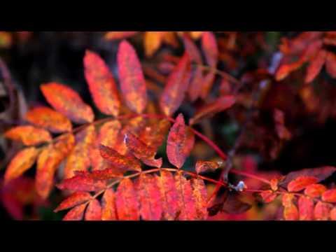 Höstfärger – HD