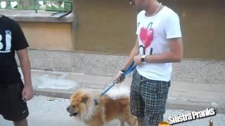 Леле този Говори с Кучета - Уникално!!!