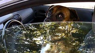 Właściciel zostawił psa samego w aucie. Jego reakcja na zaczepki przechodniów stała się hitem w sieci.