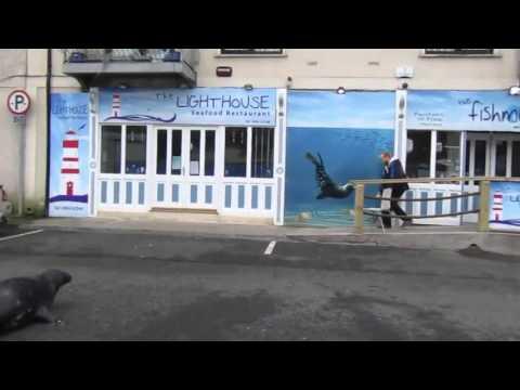 Видеохит: настойчивый тюлень-попрошайка терроризирует ресторан
