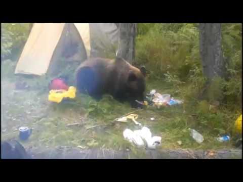 """""""Медведь пришел и жрет мои продукты"""". Сибиряк сделал эпичное селфи"""