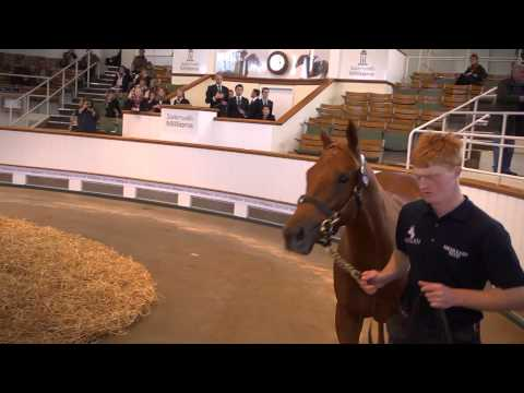 2014 Tattersalls October Yearling Sale Book 1: Day 3 Review
