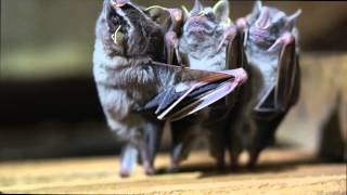 These Are The Coolest Bats You'll Ever See