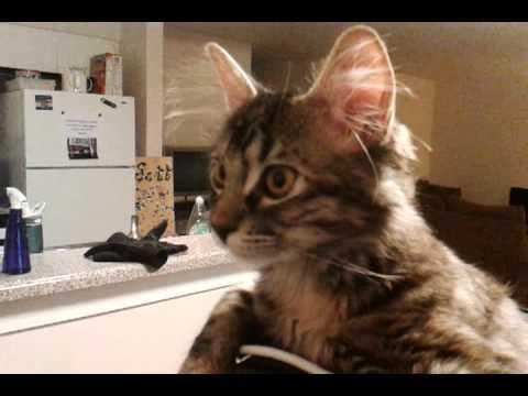 Mačka se najbolje oseća kada mu je na glavi