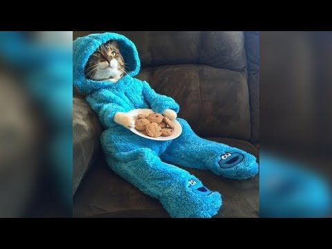 Funny cat videos - YOU have NEVER seen ANYTHHING FUNNIER and CUTER than this! - Funny CAT compilation