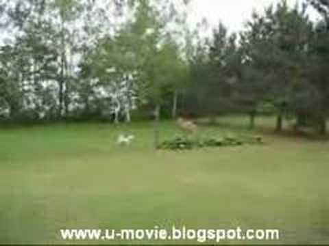 Game Deer vs dog