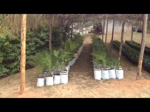 Viveros las palmas videos videos relacionados con for Vivero las palmas