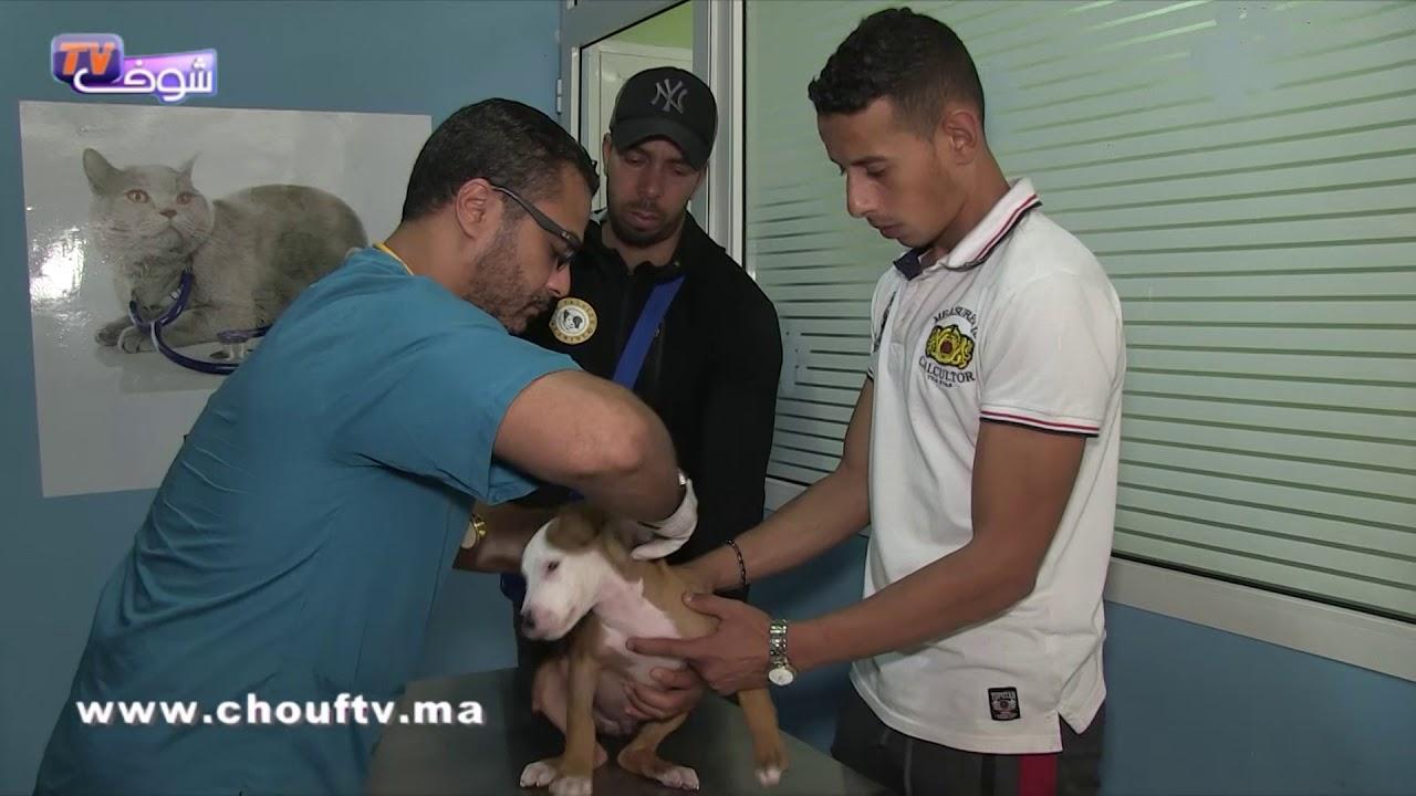 أنا و صاحبي الحيوان:هذا هو أخطر مرض يُصيب الكلاب | أنا و صاحبي الحيوان
