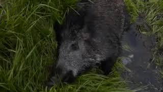 PiS-owska prokuratura umorzyła sprawę myśliwego, który dokonał egzekucji na zwierzęciu…