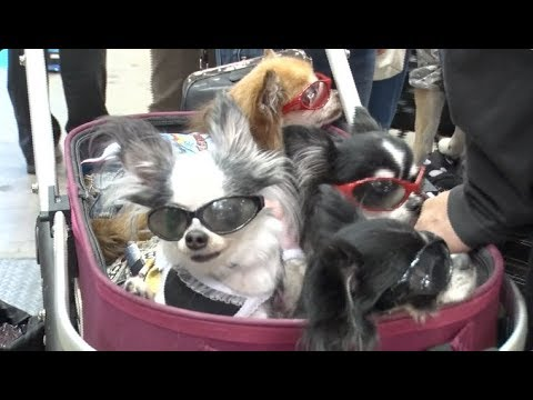 Healthcare Products Shine at Annual Pet Fair in Japan